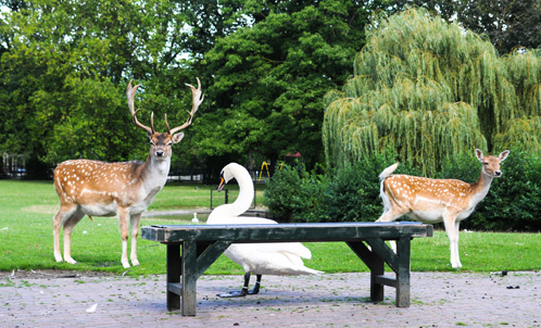 Julianapark | Gemeente Utrecht